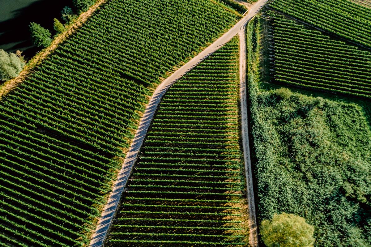 German Wine Tour frumolt photography small size-148